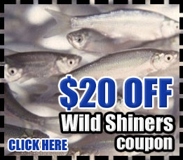 Lake Okeechobee Bass Fishing with Shiners - Coupon